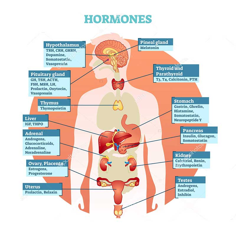 what hormones are used in bioidentical hormone replacement therapy miami